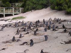 Simonstown Zuid Afrika