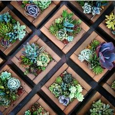 of July DIY reclaimed wood succulent planter! I show you exactly how to plant this redwood star shaped planter from Succulent Gardens! Succulent Wall Planter, Succulent Frame, Hanging Succulents, Succulent Arrangements, Diy Planters, Garden Planters, Succulents Garden, Vertical Succulent Gardens, Hanging Plants