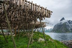 Fishes in Norway
