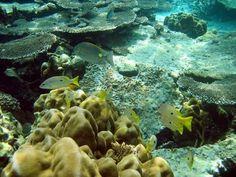 #zimmermanngoesto Thailand Scuba Diving