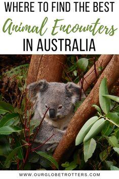 Gray Koala on Tree Branch Digital Wallpaper · Free Stock Photo Outback Australia, Visit Australia, Australia Day, Koala Australia, Travel With Kids, Family Travel, Melbourne, Brisbane, Sydney