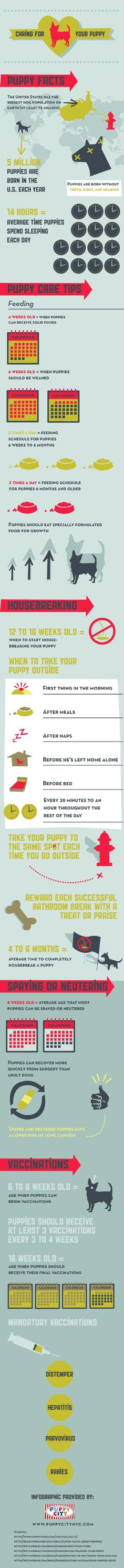 Taking care of your puppy is like taking care of a baby. It requires a lot of patience, dedication, and love. This chart will help you learn some of the basics to raising and taking care of a puppy so you know what to expect.