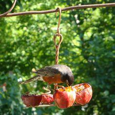 APPLE ANCHOR HUMMINGBIRD FEEDER | Copper Fruit Birdfeeders | UncommonGoods
