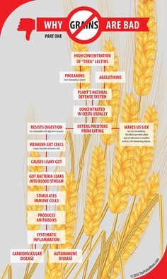 Why Grains Are Bad-Part 1, Lectins and the Gut - The Paleo Mom