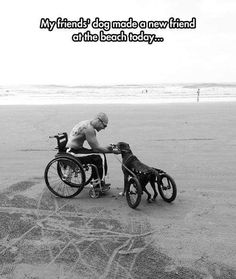 Funny pictures about You Have Wheels Too. Oh, and cool pics about You Have Wheels Too. Also, You Have Wheels Too photos. I Love Dogs, Puppy Love, Cute Dogs, Animals And Pets, Funny Animals, Cute Animals, Amor Animal, Humanity Restored, Faith In Humanity