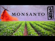 Monsanto was one of four groups to introduce genes into plants, and was among the first to conduct field trials of genetically modified crops. Monsanto was o. Missouri, Donald Trump, Gmo Facts, Detox Kur, Different Diets, Future Videos, Growth Hormone, Make Good Choices, Metabolism