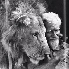 "For Cecil. For the love of lions. For the love of wildlife.  Here is an image of George Adamson. Baba ya Simba. ""Father of Lions."" British wildlife conservationist and author.  #cecilthelion #wildandfree #causeanuproar #lions #wildlife #conservationist  @nature_org @unitedforwildlife @savingthelion @lionwhisperersa @save.big.cats @rhinosinafrica"