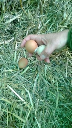 Fresh Eggs in the country side! http://eatcookandlove.com/
