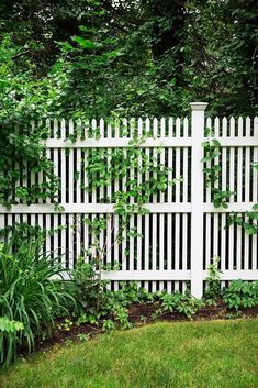 01 easy cheap backyard privacy fence design ideas HomeSpecially 01 easy cheap backyard privacy fence design ideas HomeSpecially 01 easy cheap backyard p Cheap Privacy Fence, Privacy Fence Designs, Backyard Privacy, Backyard Fences, Garden Fencing, Fenced In Backyard Ideas, Desert Backyard, Bamboo Fencing, Pool Backyard