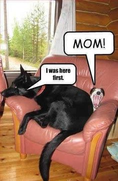 Hilarious! For more funny dog pics visit www.bestfunnyjokes4u.com/funny-dog-pics/ #funnydogquoteslove #funnydoggraphics #funnydogownersigns #funnydogbeds