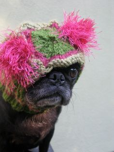 I need to start making dog accessories!!!  'Dog Hat  Custom Snuggly Hat  The Original Pug by jessicalynneart, $22.00