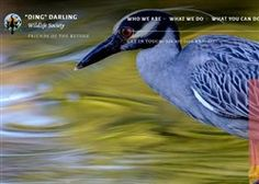 'Ding' Darling Wildlife Society Unveils New Reactive Website