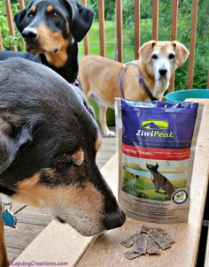 The Lapdogs think #ZiwiPeak Venison Good-Dog treats are delish! Real Meat - Grain Free - Made in New Zealand #ChewyInfluencer #dogtreats #trainingtreats ©LapdogCreations #ad