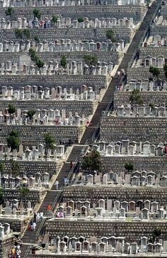 """milktree: """" cemetery """""""