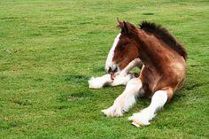 Stickin out mah tongue - Foal by Cowgirl-Hank.deviantart.com on @deviantART