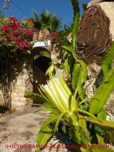 Flore da pitaia no jardim da Casa Catita, Algarve-Portugal