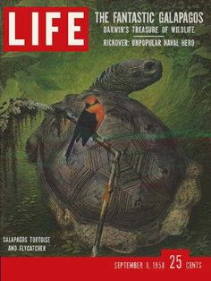 "The Galapagos Islands - Life Magazine, September 8, 1958 issue - Visit http://oldlifemagazines.com/the-1950s/1958/september-08-1958-life-magazine.html to purchase this issue of Life Magazine. Enter ""pinterest"" at checkout for a 12% discount. The Galapagos Islands"