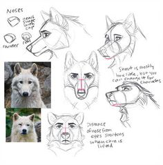 Canine/Wolf Face Studies by ritwells on DeviantArt Wolf Face Drawing, Furry Drawing, Drawing Base, Figure Drawing, Animal Sketches, Animal Drawings, Art Sketches, Art Drawings, Wolf Drawings