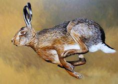 Jack Rabbit, Rabbit Art, Hare Pictures, Animal Pictures, Animals And Pets, Baby Animals, Cute Animals, Beautiful Creatures, Animals Beautiful