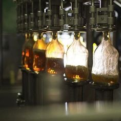 All of our rum is bottled here in #Jamaica, making our entire process 100% Jamaican from cane to cup.