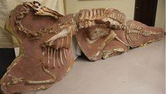 Bactrosaurus fossils repatriated to Mongolia