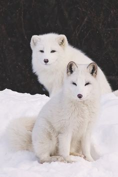 Look at these Asian puppies!