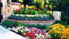 A landcape of brightly colored annuals from the Denver area Denver Area, Landscape Services, Sidewalk, Garden, Plants, Snow, Color, Design, Lawn And Garden
