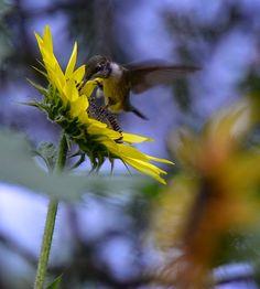 Ohio Bird nature Blog