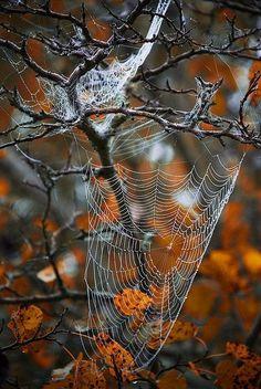 enchanting-autumn: Nature gets ready for Halloween ~ JustABigGeek Autumn Nature, All Nature, Autumn Day, Autumn Leaves, Happy Autumn, Fall Days, Hello Autumn, Autumn Aesthetic, Autumn Inspiration