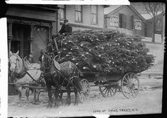 Tree delivery coming in to town, 1910.