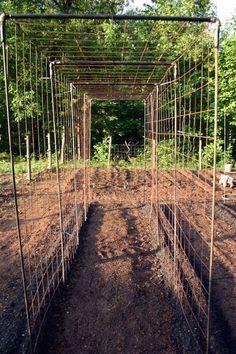 Vegetable Garden Design: DIY Bean Trellis – Gardenista - New ideas Backyard Vegetable Gardens, Veg Garden, Vegetable Garden Design, Garden Trellis, Edible Garden, Garden Landscaping, Vertical Vegetable Gardens, Garden Tips, Garden Fun