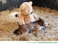 baby-foal-pony-horse-pics-cute-beautiful-animal-pictures.jpg 560×423 pixels