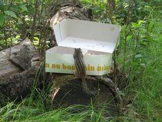 Chipmunk peeking into a pastry box