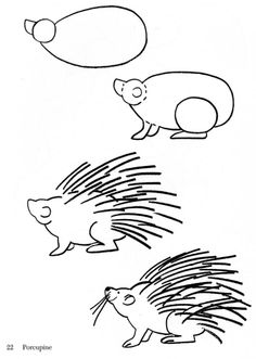 porcupine drawing - Google Search