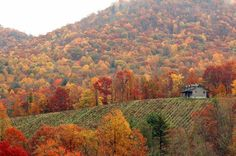 Autumn in the Smokeys...