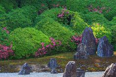 光明院・サツキの頃 : 花景色-K.W.C. PhotoBlog
