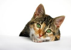 La depresión en los gatos