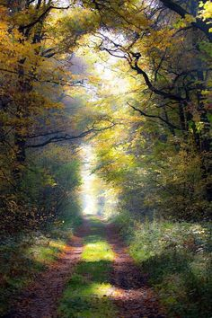 ~~Enchanted autumn forest, Poland by r. Beautiful World, Beautiful Places, Beautiful Pictures, Landscape Art, Landscape Paintings, Forest Road, Forest Trail, Autumn Forest, Nature Pictures