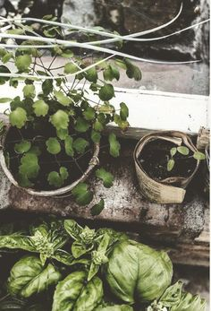 grow sustainably; grow organic; grow local