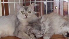 ママとハナ