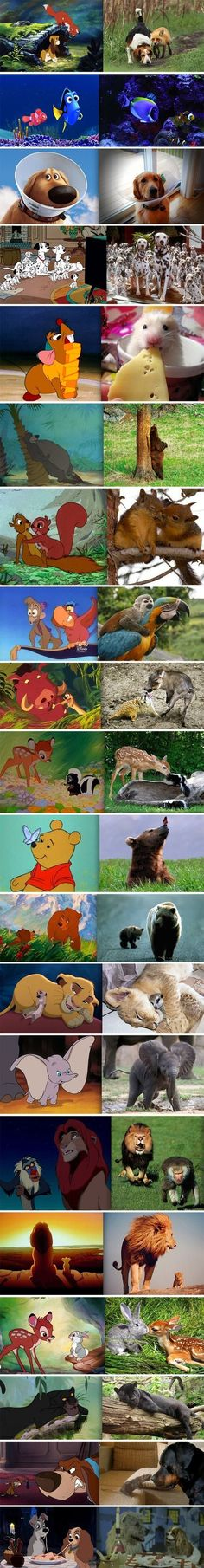 Disney animals in real life. Lol