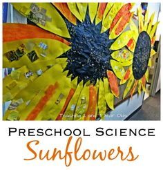 Preschool Science with Sunflowers
