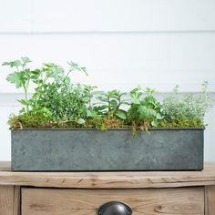 Herbs for your windowsill: Terrain Food52 Herb Garden #shopterrain