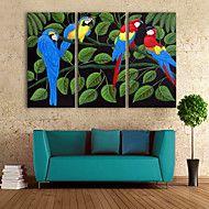 e-FOYER+toile+tendue+art+couleur+perroquet+peinture+décoration+ensemble+de+3+–+EUR+€+79.37