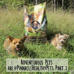 Bailey switched to Pinacle for a month! See how she did and read about our recent adventure here: Holistic Dog Food, Dog Food Reviews, Sweet Potatoes For Dogs, Healthy Pets, Dogs Of The World, New Adventures, Free Food, Puppies, Animals