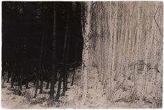 """Masao Yamamoto    """"I photograph to capture existing phenomena. Thinking about this day by day, the mountain ceases to be a mountain, the cloud is no cloud, things left behind are not left behind… maybe I begin to see what only I can see."""" — Masao Yamamoto"""