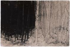 black and white forest. masao yamamoto