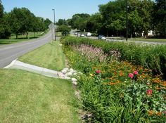 How beautiful it would be if every Road Verge was converted into Self-Sustaining Rain Gardens. They conserve water, filter runoff pollution, improve water quality, recharge local groundwater, reduce mosquito breeding, increase beneficial insects that eliminate pest insects, reduce potential of flooding, and create habitats for birds & butterflies. What is there not to love???