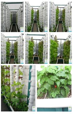 Vertical Aquaponics - Aquaponic Gardening - Are you wondering what is Aquaponics? The most simple definition is that it is the marriage of aquaculture (raising fish) and hydroponics (the soil-less growing of plants) that grows fish and plants together in Hydroponic Gardening, Organic Gardening, Container Gardening, Gardening Tips, Aquaponics Greenhouse, Aquaponics System, Aquaponics Fish, The Farm, Vertical Farming
