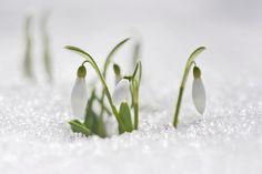 Zima i wiosna w jednym zdjęciu